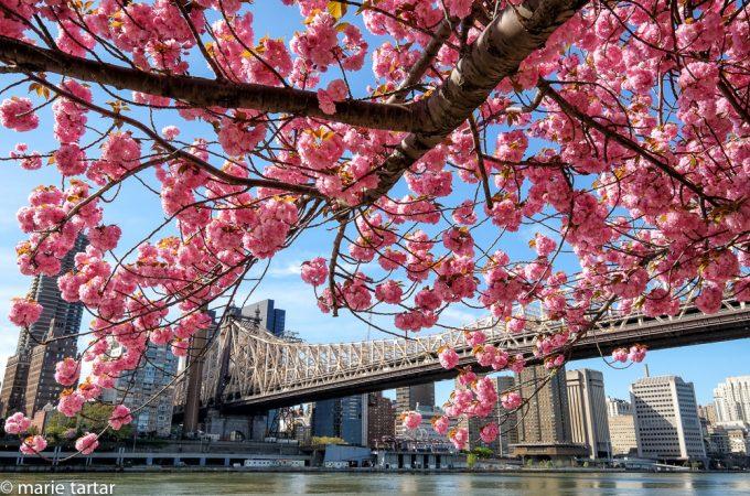nyc-spring-aperture-photo-arts